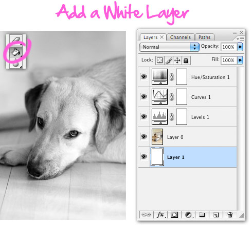 Add white layer