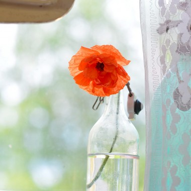 My Favorites: Red Poppies