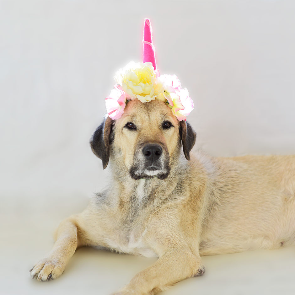 Our pup is really a unicorn