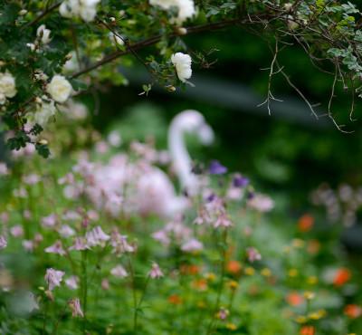 Juhannuksen kukkia ja lomasuunnitelmia